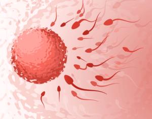 male infertility 300x235